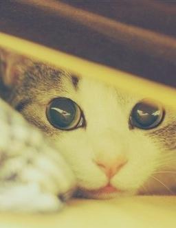 可爱萌物图片猫咪三