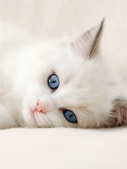 萌物猫咪唯美图片