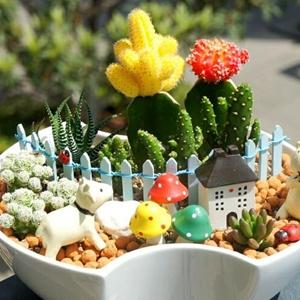 创意有趣的多肉植物盆栽