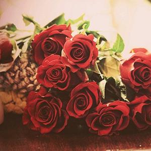 可爱唯美玫瑰花儿图片