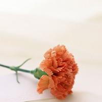 可爱花开春天唯美意境图片