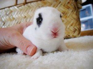 可爱的小白兔兔