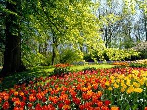 鲜花盛开的美丽春天
