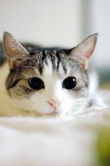 可爱的猫咪大全图片之二