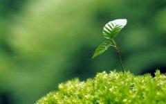 充满生命力量的绿色小嫩丫