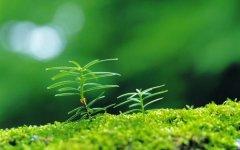 充满生命力量的绿色小嫩丫四