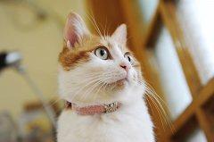 二只猫咪清晰可爱图片