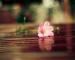 非主流花儿可爱图片
