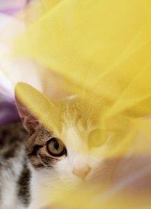 超可爱的猫咪照片