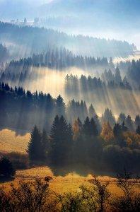 森林里美丽的晨光风景图片