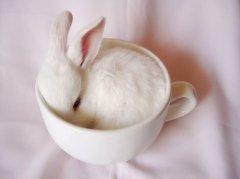 白色杯子里可爱的小白兔