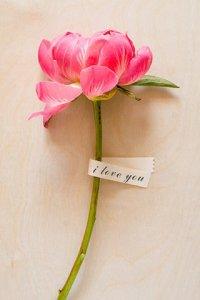 可爱的花朵手机图片