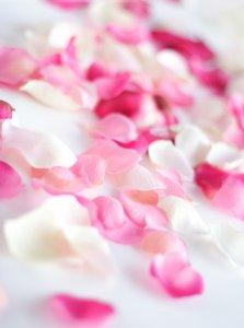 玫瑰花瓣可爱大图片