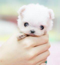 可爱萌表情的小狗图片