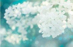 花儿唯美意境图片