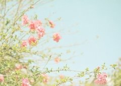 小清新唯美可爱图片
