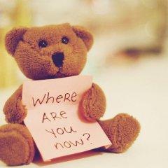 可爱的泰迪熊玩具
