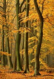 美丽的秋天风景图片