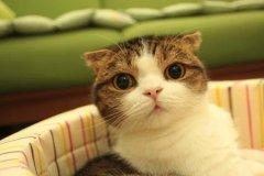 可爱萌物猫咪图片