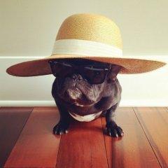 可爱搞笑小狗装扮图片
