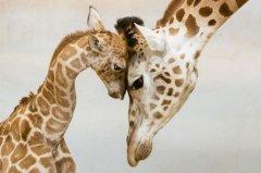 有爱的可爱动物们