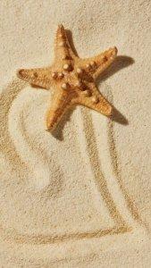 沙滩海星手机图片