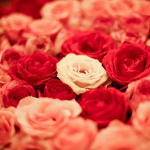 唯美意境玫瑰图片