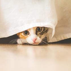 可愛貓咪圖片