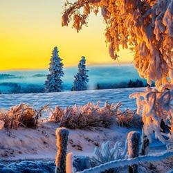 美丽的冬日黎明雪景图片