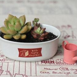 文艺小清新多肉植物图片