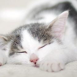 睡觉的猫咪卡哇伊可爱图片