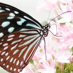 美丽的蝴蝶昆虫图片大全
