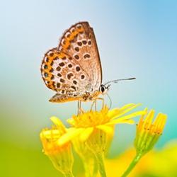 唯美可爱蝴蝶图片精选