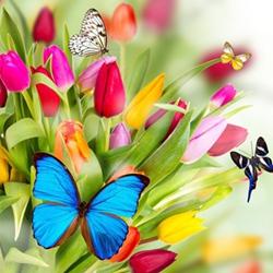 蝴蝶唯美意境图片大全