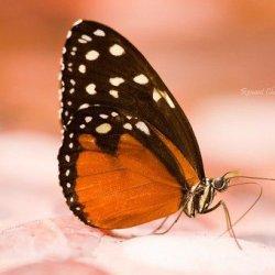 美丽优雅的蝴蝶图片大全