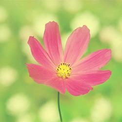 春天野外草地花儿可爱图片