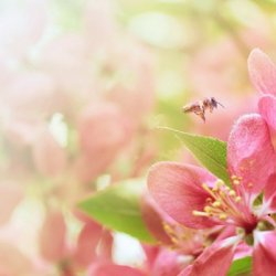 花儿争相开放的春天图片