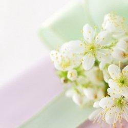 春天鲜花开放唯美图片