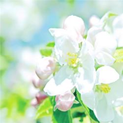 唯美可爱花朵花瓣图片