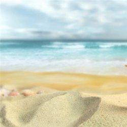 沙滩大海贝壳风景图片大全
