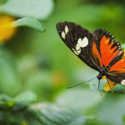 大自然花众里的美丽蝴蝶精灵