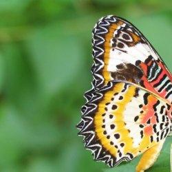 野外自然里的珍稀昆虫蝴蝶图片