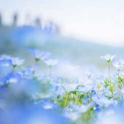 美丽的花海自然风景图片大全