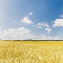 小清新自然风光美景图片