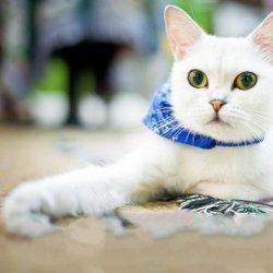 可爱萌宠帅气猫咪图片大全