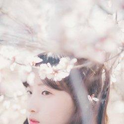 樱花日系女生可爱单纯唯美照片