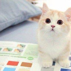 萌的要死的可爱小猫咪图片