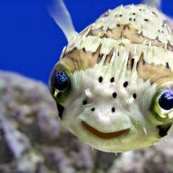 搞笑可爱的小动物图片