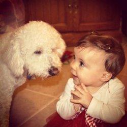 宝宝和狗狗的可爱搞笑萌照
