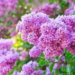 花儿因为你而绽放花卉图片